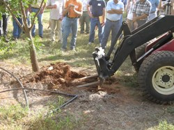 forklift blades rip tree from landscape soil